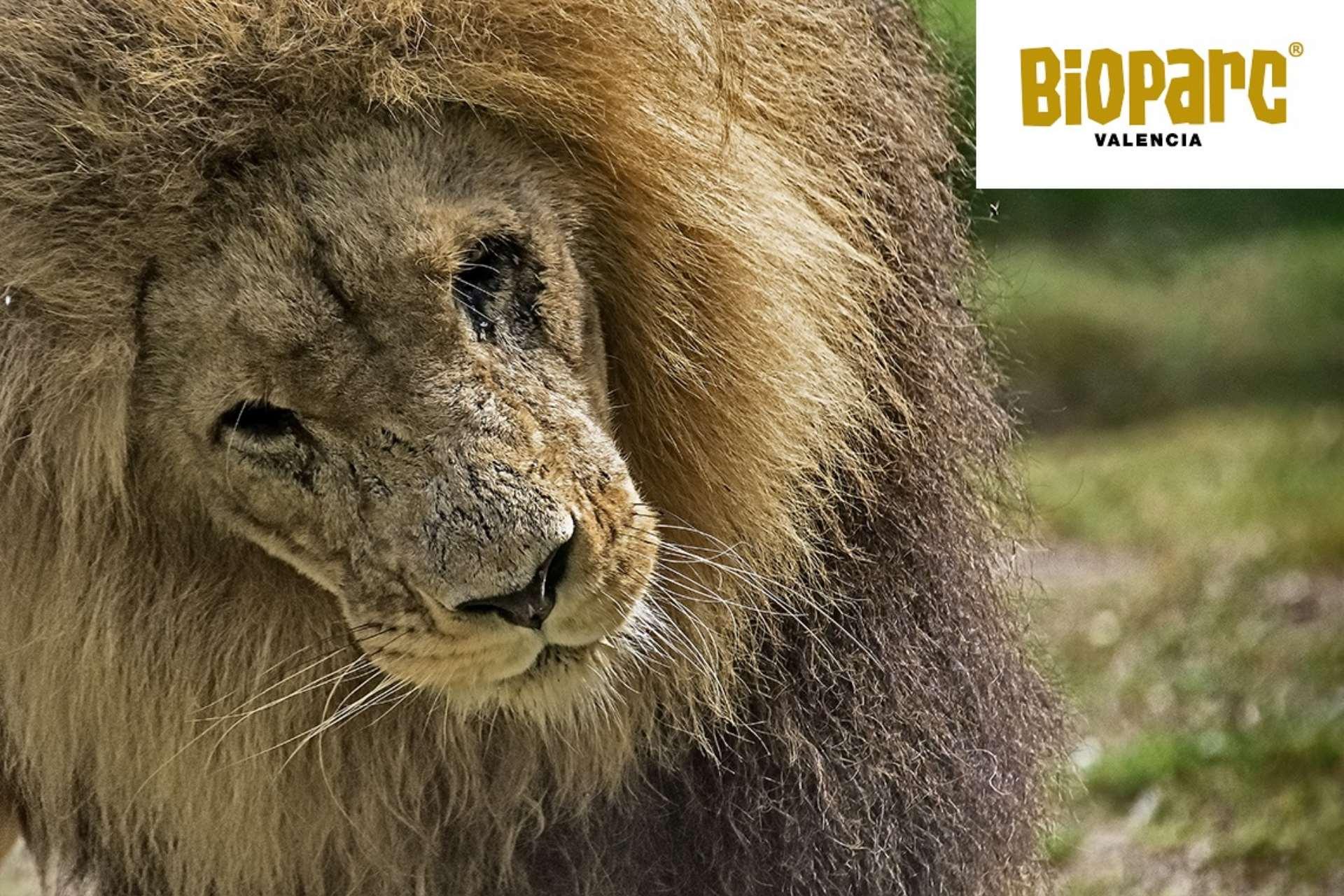 Visitar el Bioparc en Valencia. Guía de turismo Valencia