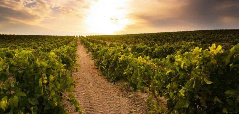 Visitas guiadas viñedos Valencia.