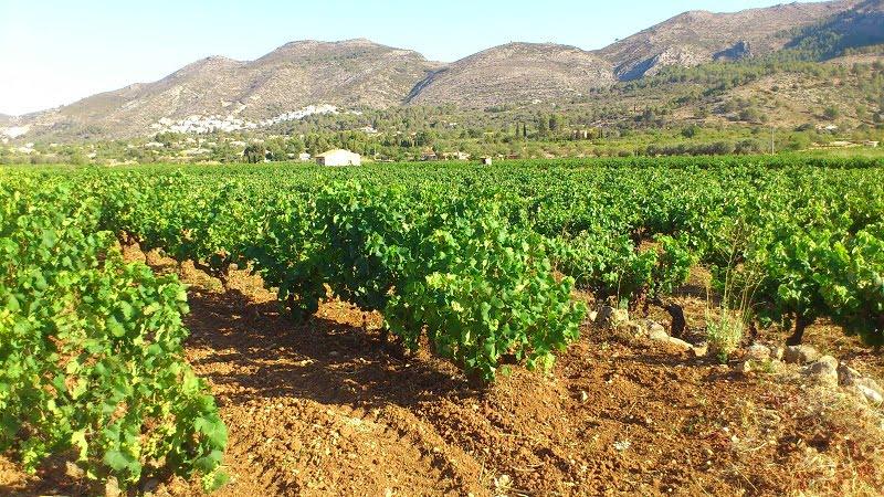 Visitas guiadas viñedos Valencia