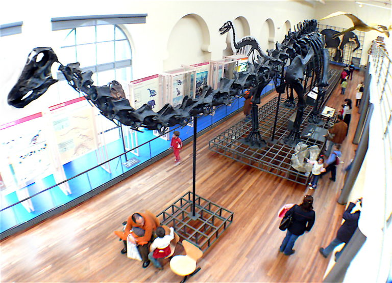 museo de las ciencias naturales valencia